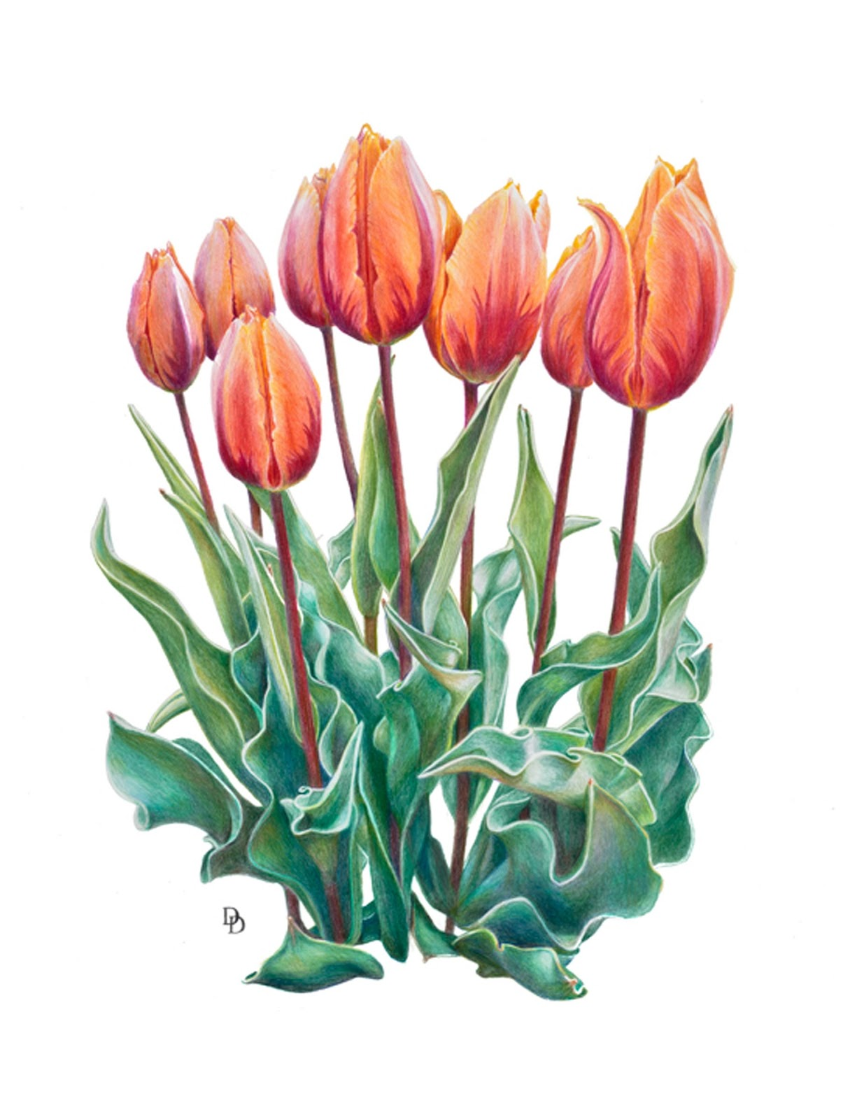 Rocky Mountain Society of Botanical Artists: March 2013