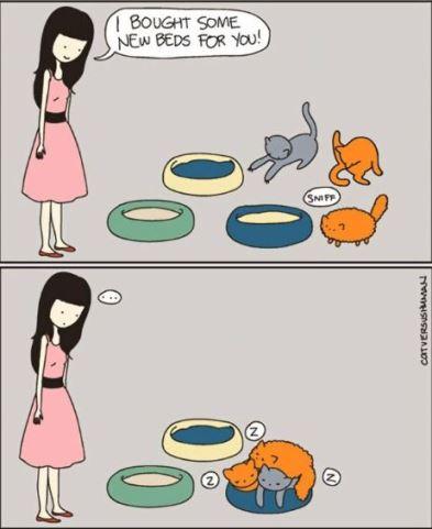cats enjoying each other's company via http://www.catversushuman.com/ #catlove