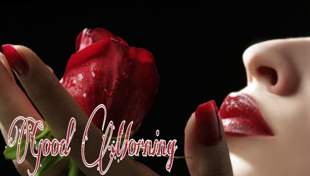 70+ Good Morning Romantic Rose Images Pictures Photo Wallpaper Download HD