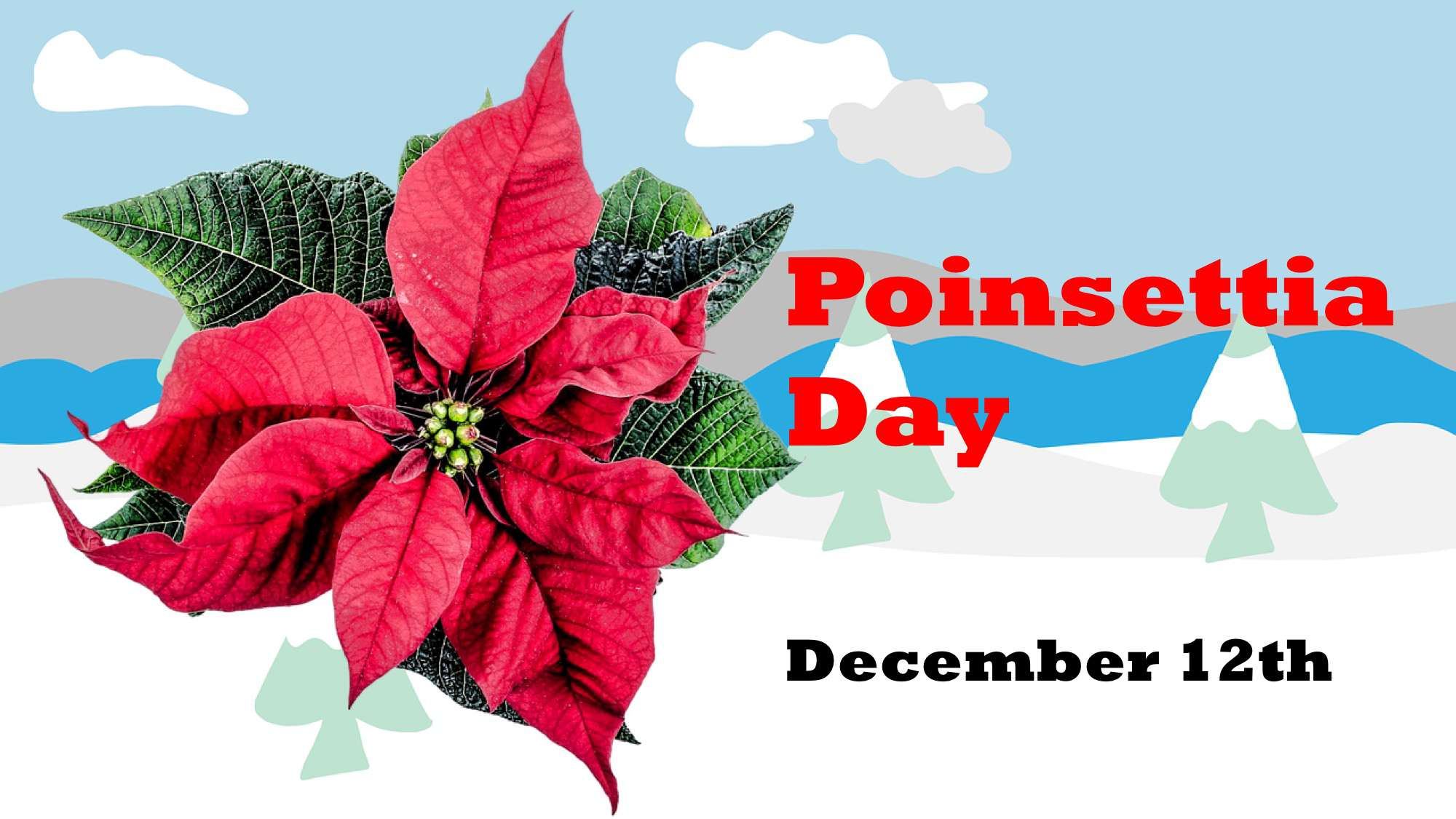 National Poinsettia Day Wishes Lovely Pics