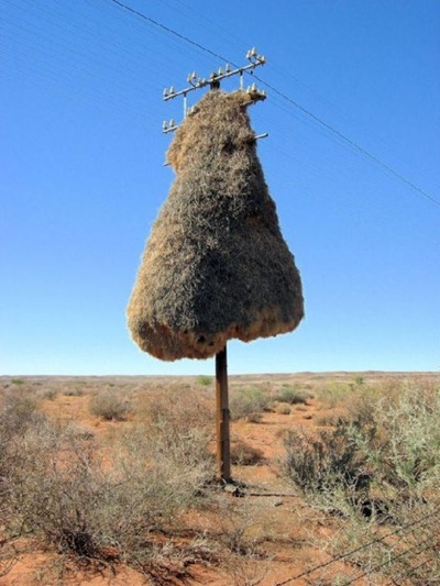 Most Unusual Places For Birds Nests Ladies Mails