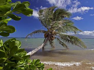 Molokai252C Hawaii   erc