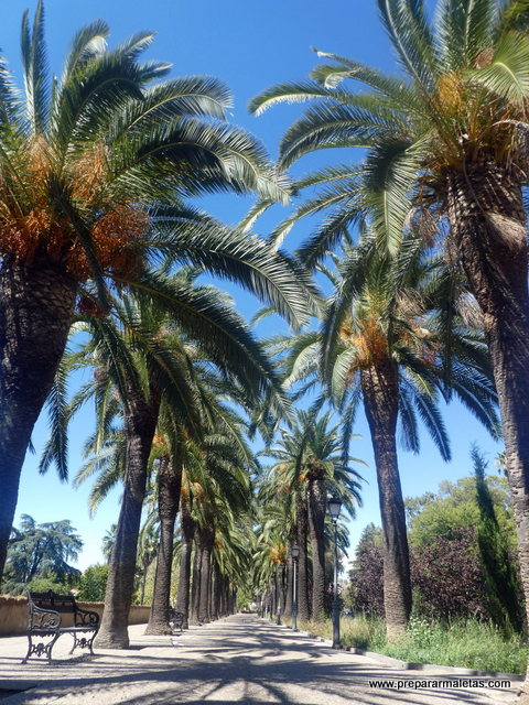 paseo palmeras en Badajoz