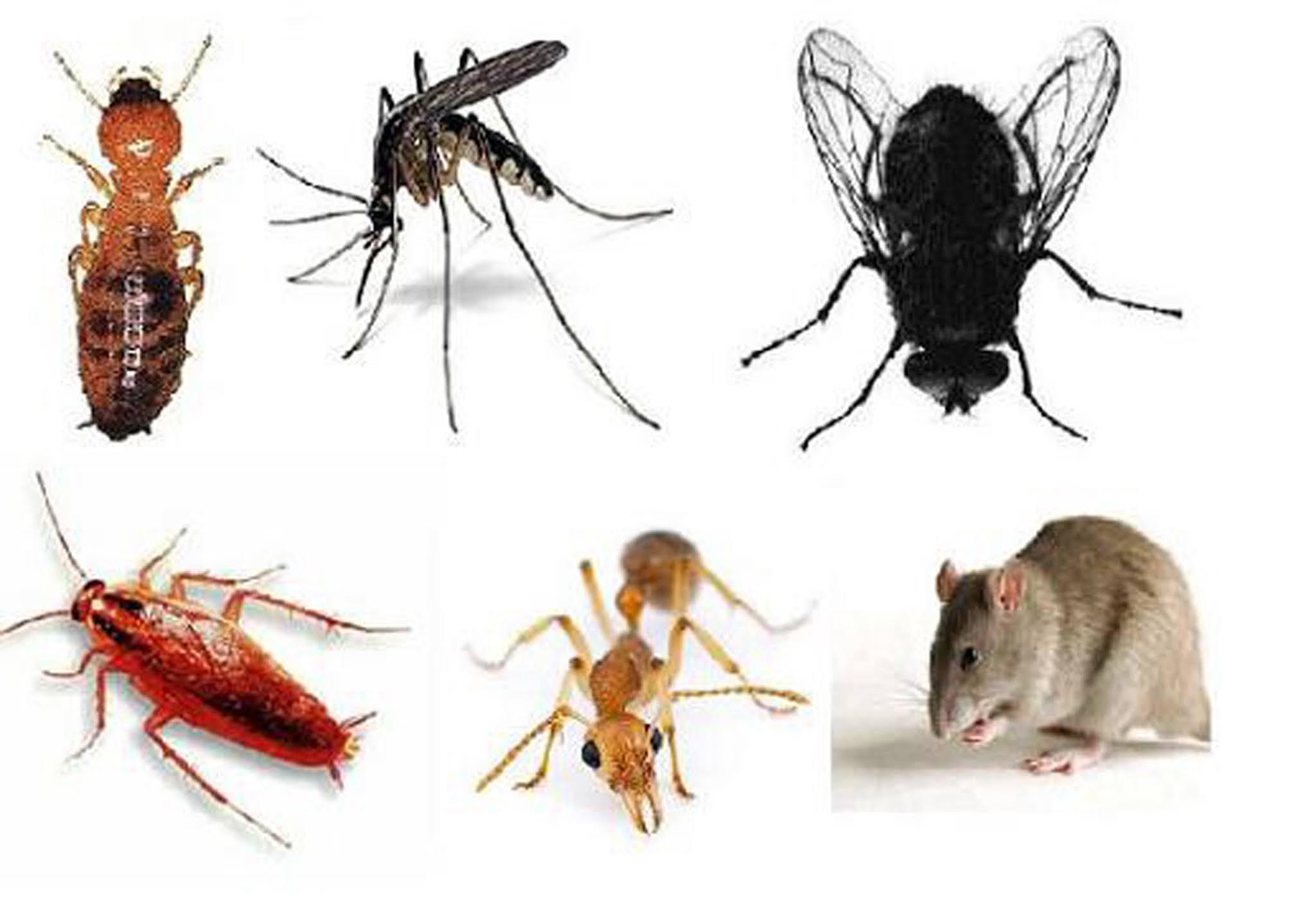 Phun muỗi tại huyện Mê Linh