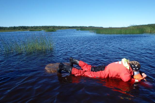 Luontokartoittaja makaa mahallaan vedessä pelastautumispuvussa ja katsoo vesikiikarilla pinnan alle