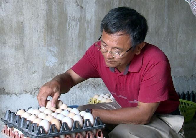 Lão nông Nam Định sở hữu 20.000 con gà, lãi 50 triệu đồng/tháng - Ảnh 2