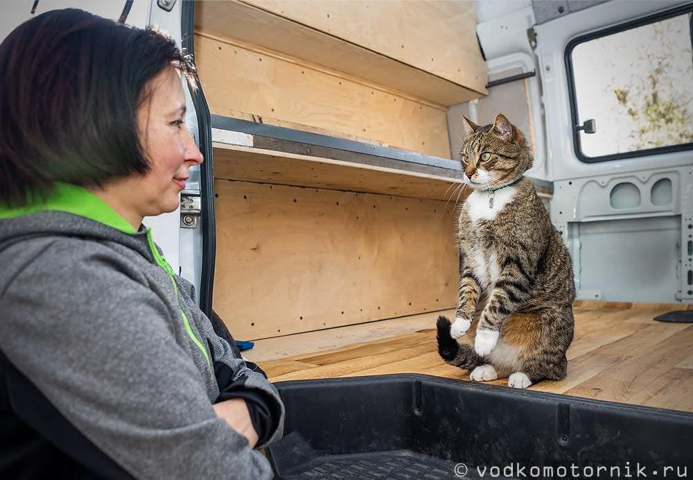 Кот Шмель докладывает коку о приемке выполненных работ