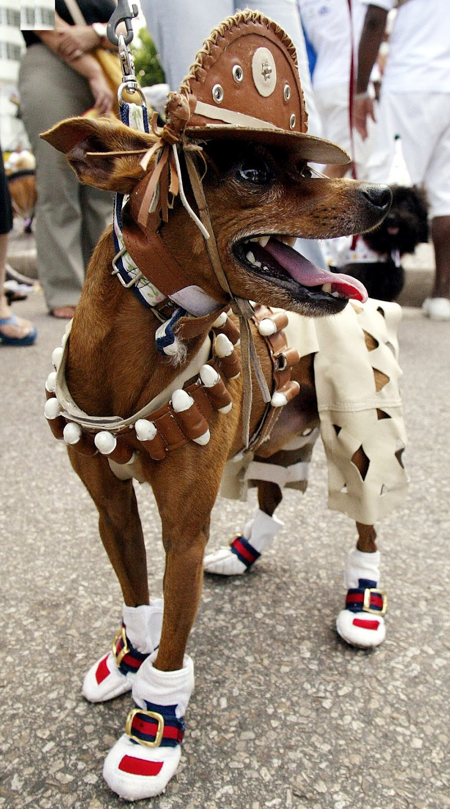 All List Of Different Dogs Breeds Dog Clothes