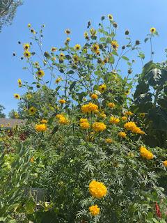 Marigolds & Sunflowers