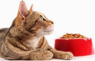 Gatos sentem mais sensibilidade nos bigodes