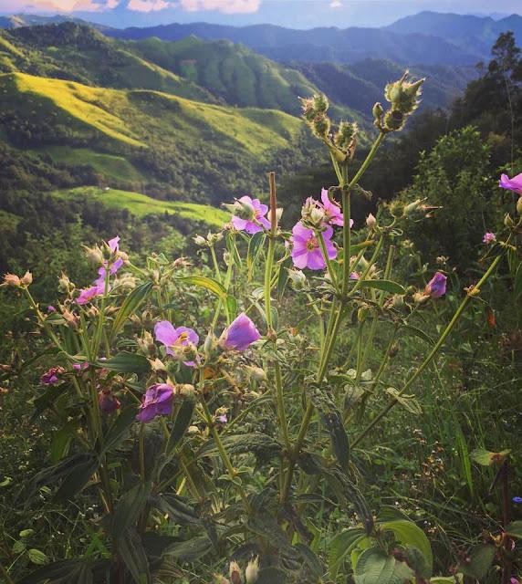 Thơ về Tây Bắc - Chùm thơ hay viết về vùng núi Tây Bắc