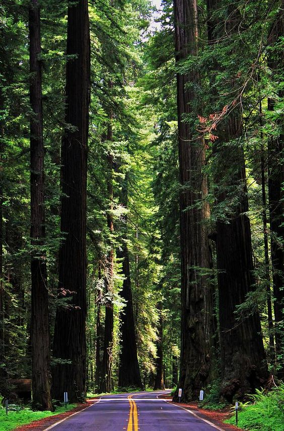 Redwood National and State Parks, California, USA