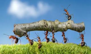 Karıncaların Özellikleri Yaşamı ve Kaç Türü Vardır