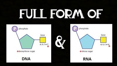 Full form of DNA & RNA in Science? - What is DNA & RNA?