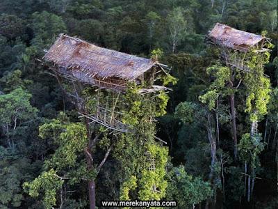 Rumah Pohon Suku Korawai.jpg