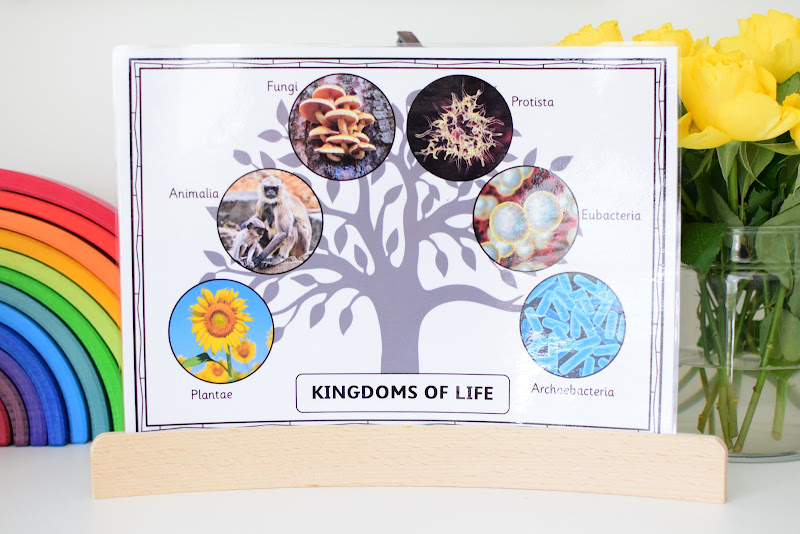 Introducing the Six Kingdoms of Life