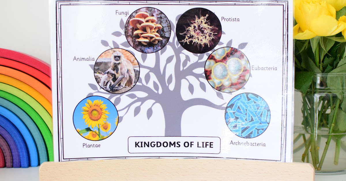 Introducing the 6 Kingdoms of Life | The Pinay Homeschooler