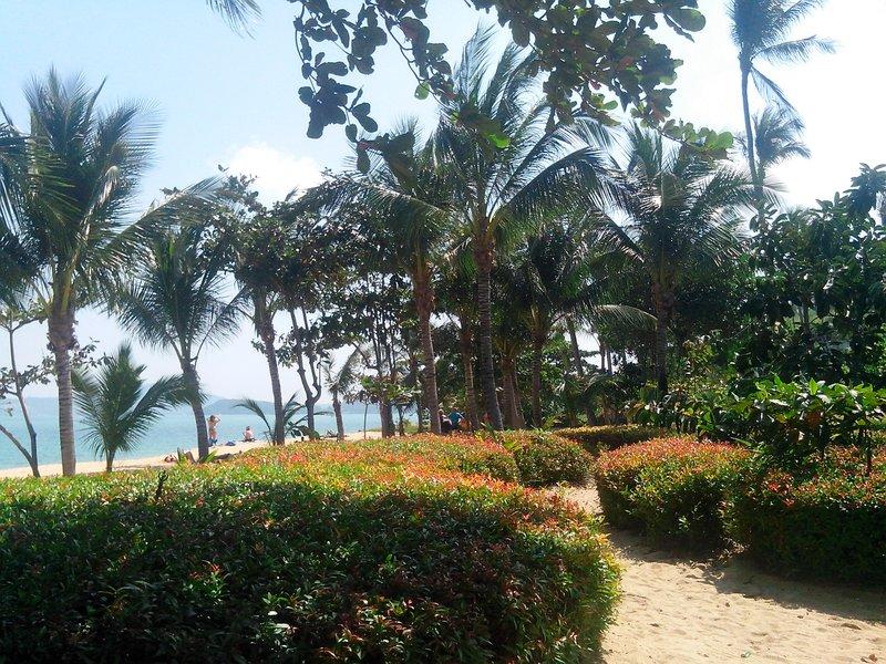 Кусты и пальмы Таиланд