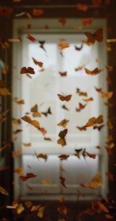 Butterfly Mobile HD Wallpaper