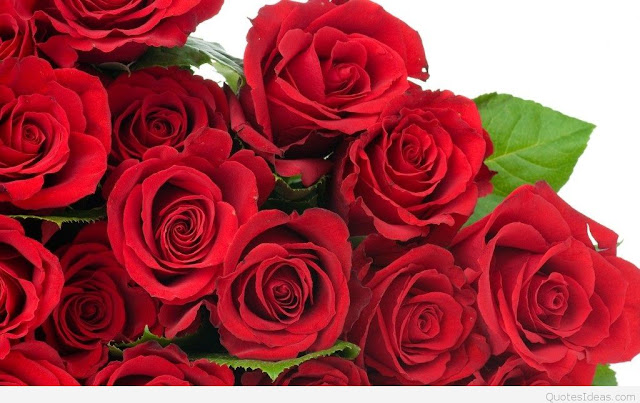 Happy Rose Day Cards