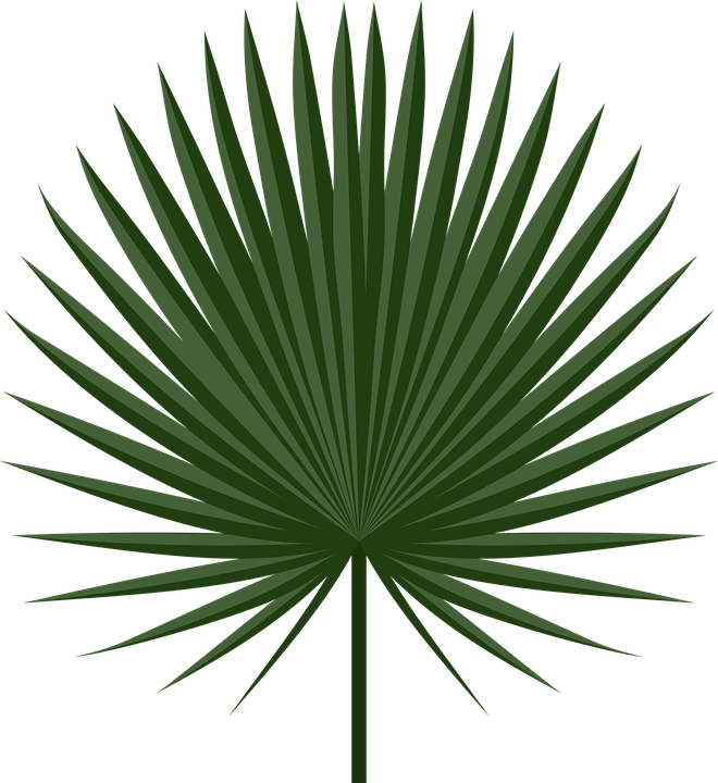 Palm Leav for Khmer new year png file