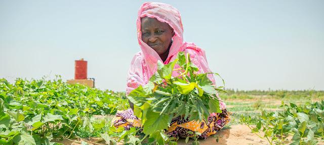 Una mujer en Malí trabaja en un huerto comunitario que forma parte del proyecto de fomento de la capacidad del Programa Mundial de Alimentos.PMA/Simon Pierre Diouf