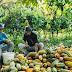 Bolsonaro sanciona apoio a agricultor familiar, mas veta auxílio emergencial