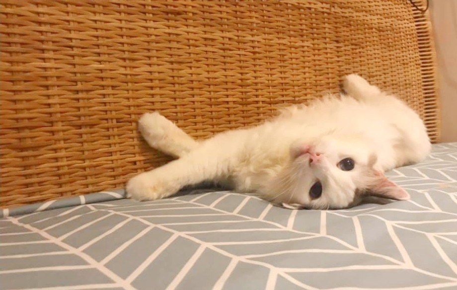 Tapping on our Pets as Influencers, cat sleepy