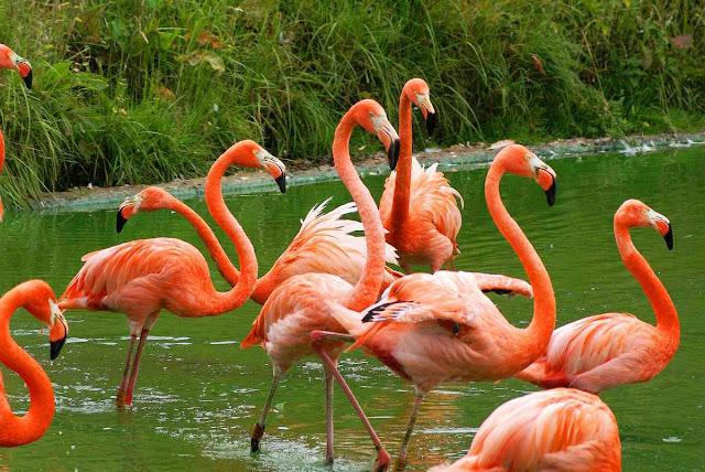 """Seperti misalnya """"bagaimana faktor lingkungan yang dapat mempengaruhi tingkat reproduksi dari flamingo?"""""""