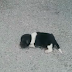 Newborn Puppy Was D.u.m.p.e.d On The Street, Crying - Still Finds It In Himself To Trust Humans