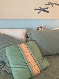 Close-up of bed in a beach-themed room, cat with black and white head hiding behind pillows.