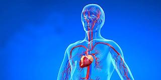 anjiyo neden yapılır ile ilgili aramalar anjiyo ameliyatı nedir  anjiyo kimlere yapılır  anjiyo nasıl yapılır ne kadar sürer  anjiyo riskleri  anjiyo sonrası  anjio nasıl yapılır kasıktan  anjiyo olanların yorumları  anjiyo stent
