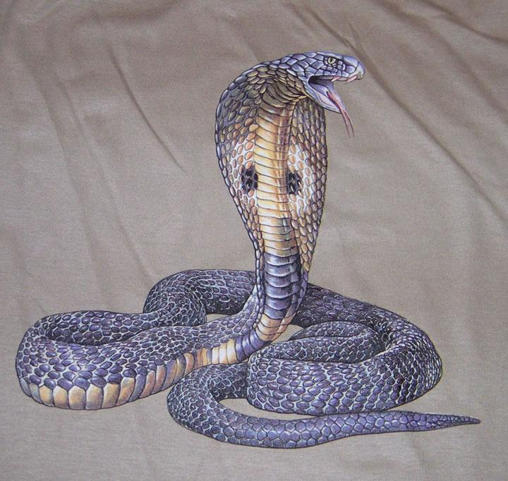 The king cobra This species in Southeast Asia and parts of ...