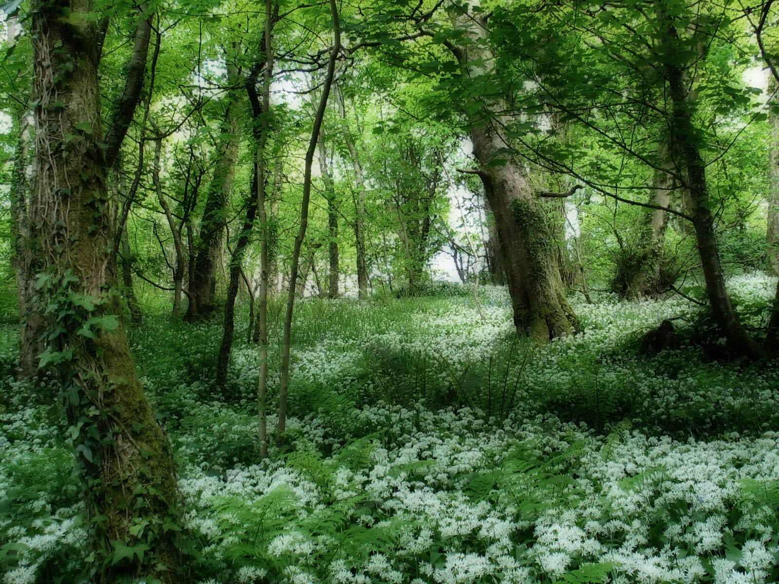 forest flowers wallpapers - photo #18