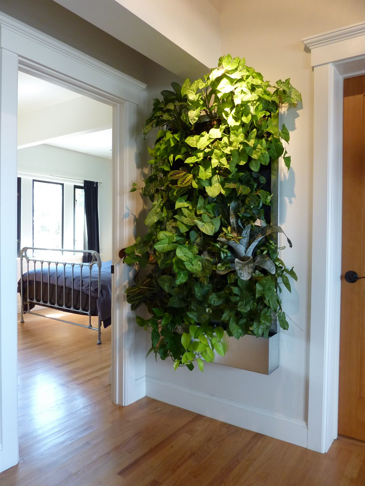 plants on walls vertical garden systems low light tropical living art. Black Bedroom Furniture Sets. Home Design Ideas