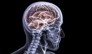 Berberine Based Alzheimer Inhibitor---By JNCASR