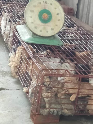 ban the cat meat trade in Hoi An Vietnam
