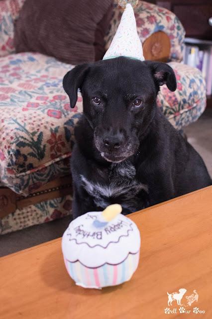 Matt's Gotcha Birthday 2020 (©Jenny Bell @ Bell Fur Zoo)