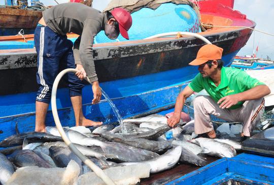 Cá đầy khoang ngư dân Quảng Ngãi vẫn khóc ròng