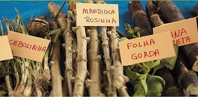 Quilombolas do Vale do Ribeira festejam dez anos de sua feira de sementes