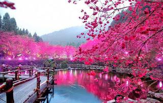 اجمل صور الورود الزهور الطبيعية