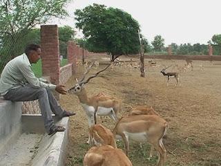 मानद वन्य जीव प्रतिपालक अनिल धारणीया