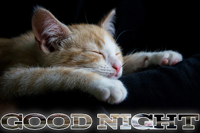 Good night image,cat sleep good night image
