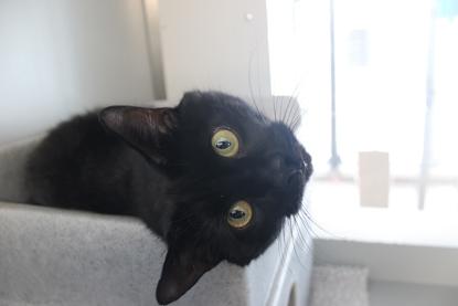 black cat sideways head