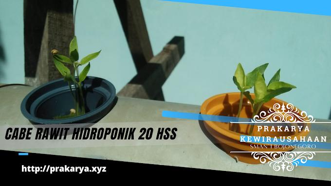 Praktik Budidaya Tanaman Hidroponik Tahapan Merawat Pertumbuhan Tanaman Cabe Rawit dan Cabe Keriting