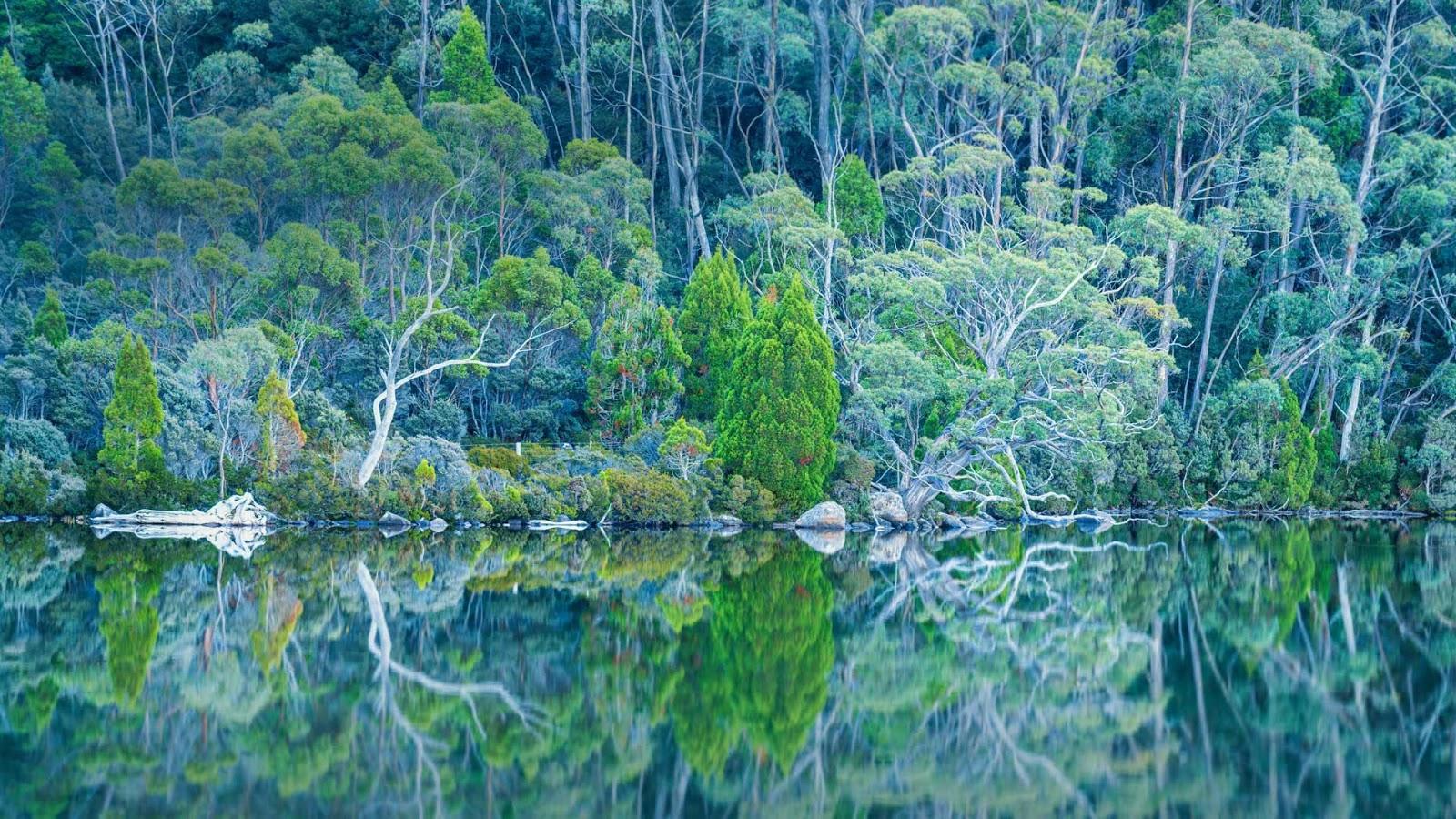 Lake Dobson in Mount Field National Park, Tasmania, Australia