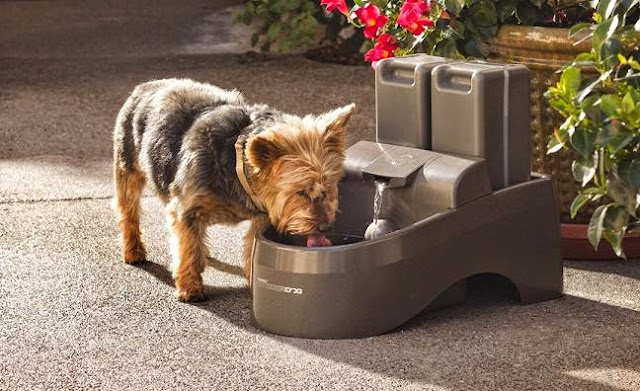 Creative Dog Products and Gadgets (15) 6