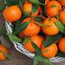 Скільки мандаринок можна з'їдати в день: відповідь дієтологів