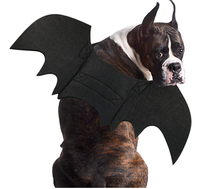 Halloween Dog Bat Costume Halloween Costume Bat Wings