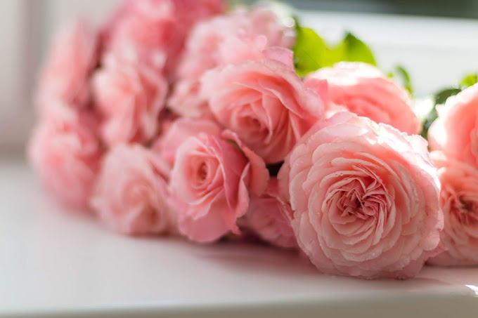 Pink Flower Wallpapers